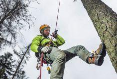 Lesy ČR ukládají semena ze stromů v bance osiva i v semenářském závodě
