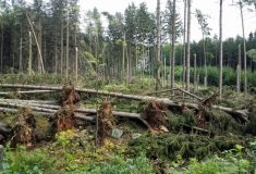 V deseti katastrálních územích na Hořicku lidé nesmí vstupovat do porostů, na lesní cesty mohou
