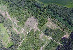 Některé úvahy nad suchými obdobími voblasti působnosti Lesní správy Znojmo