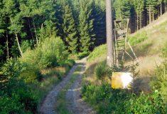 Lesní cesta Čechova louka má nový kabát