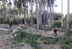 Deváťáci na Frýdlantsku poznali práci v lese