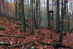 V hraničních hvozdech Českého lesa jsou dvě nová bezzásahová území