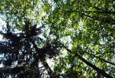 Místa úsekových ředitelů v Lesích ČR jsou od listopadu obsazená