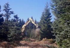 Smrky pichlavé napadené kloubnatkou nahradí na náhorní plošině Jizerských hor jiné dřeviny