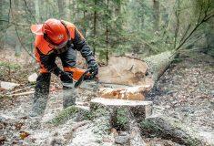 Těžaři poprvé u Lesů ČR získali mezinárodní evropský certifikát pro práci s motorovou pilou