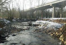 V Losinském potoce se zase daří vodním živočichům