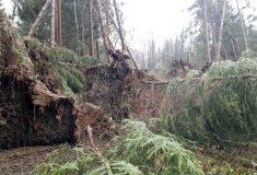 Na Frýdlantsku je kvůli polomům zakázaný vstup do lesa