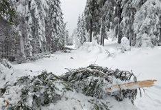 Upozornění pro návštěvníky Krušných hor: Vlesích padají stromy acesty jsou zaváté, vstup nedoporučujeme