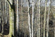 Prezenční aukce dříví nastojato 28. 3. 2019 KŘ Plzeň
