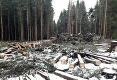 Asi milion stromů poškodila ve státních lesích vichřice Eberhard