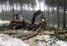 Lesy ČR vypsaly veřejnou zakázku na harvestorové práce