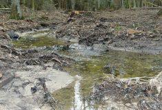 Lesy ČR vrací vodu do přírodní rezervace Králova zahrada