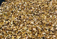Ministerstvo zemědělství spustilo portál pro nákup a prodej sazenic a semen lesních dřevin. Pomůže osázet holiny po kůrovcové kalamitě