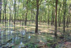 Do obory Soutok se o víkendu cyklisté kvůli velké vodě nedostanou