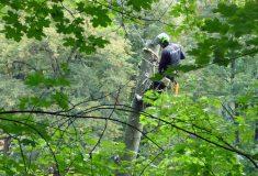 V parku ve Zbrašovských aragonitových jeskyních jsou tisíce nových keřů  a stromů, starší dřeviny měli v péči arboristé