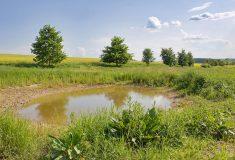 Lichovský potok meandruje v přírodním korytě a zadržuje vodu vkrajině