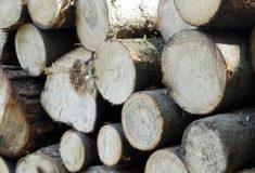 Lesy ČR prodaly svůj podíl v Hradecké lesní adřevařské společnosti