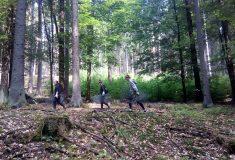 Společný lesnický projekt Lesů ČR a Hnutí Duha začal