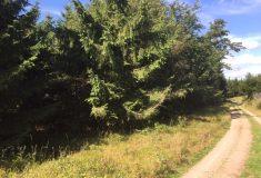 Lesy ČR v září vyhlásí lesnický tendr 2020+