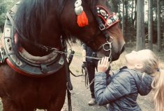Jak těžká je motorová pila? Kolika let se dožije tažný kůň? Kolik si vydělá těžař v lese?