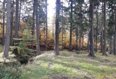 Lesy ČR začaly hodnotit nabídky podané v lesnickém tendru 2020+