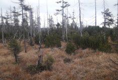 Bezzásahové území v Rašeliništi Jizery budou sledovat vědci