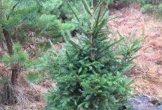 Vánoční stromky dětem pošesté