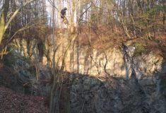 U Hranické propasti začala těžba přestárlých nebezpečných stromů