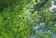 Lesy České republiky zveřejnily Strategii rozvoje
