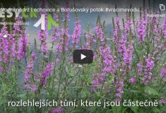 Vybudování vodní nádrže Lechovice a revitalizace Borušovského potoka