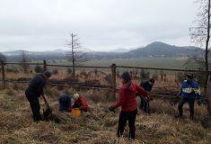 Dobrovolníci sázeli na Českolipsku, studenti sbírali borové šišky