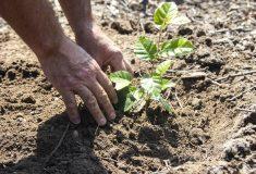 Studentům: Přijďte, pomozte vlese a vydělejte si