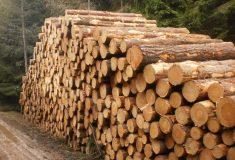 Lesy ČR: Prodej dříví veřejnosti je obnovený a výhodnější
