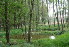 Desítky nádrží, tůní a mokřadů, přírodní koryta potoků – Lesy ČR vrací lesům a krajině VODU
