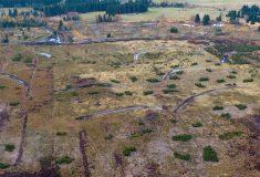 Lesy ČR dokončily nejrozsáhlejší obnovu rašeliniště v Krušných horách
