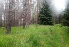 Lesy ČR vyznačily na Děčínsku novou stezku přeshraničního treku