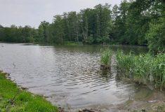 Lesy ČR obnovily velký mokřad na Hodonínsku. Zadrží vodu v krajině