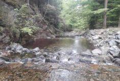 Olomoucký kraj ocenil Lesy ČR za přínos v oblasti životního prostředí