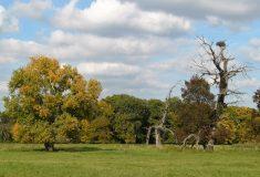 Soutok: Státní lesníci se dohodli sochranou přírody na dalším hospodaření