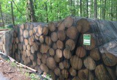 Lesy po letošní kůrovcové sezóně: Na Vysočině a na Moravě se situace mírně zlepšuje, v Libereckém kraji naopak