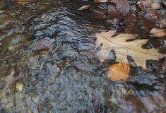 V lesích v Libereckém kraji letos vybudovaly Lesy ČR desítky tůní