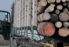 Aplikaci Lesů ČR na kontrolu přepravovaného dříví používá policie