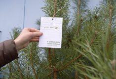 Lesy ČR darovaly nemocnicím vánoční stromky a poděkovaly zdravotníkům za obětavost