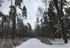 Lesy ČR pronajmou oboru a 19 honiteb