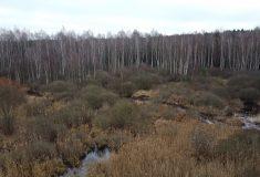 Na Borkovických blatech se zase začne tvořit rašelina, Lesy ČR obnovily 9 hektarů a projekt pokračuje