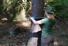 Budoucí lesníci se v létě stanou adjunkty ve státních lesích