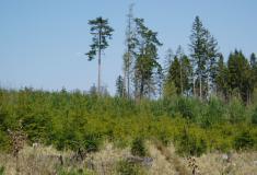 Lesy ČR letos zalesní největší plochu v historii