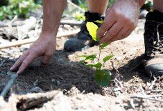 Státní lesy zahajují Dny za obnovu lesa: dvě stě akcí po celé republice