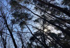 Lesy ČR loni hospodařily v kladných číslech Podnik intenzivně obnovuje lesy po kalamitě a opět tvoří rezervní fond