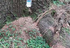 Lesy ČR apelují na návštěvníky lesa: Feromonové sáčky patří do plastových lapačů